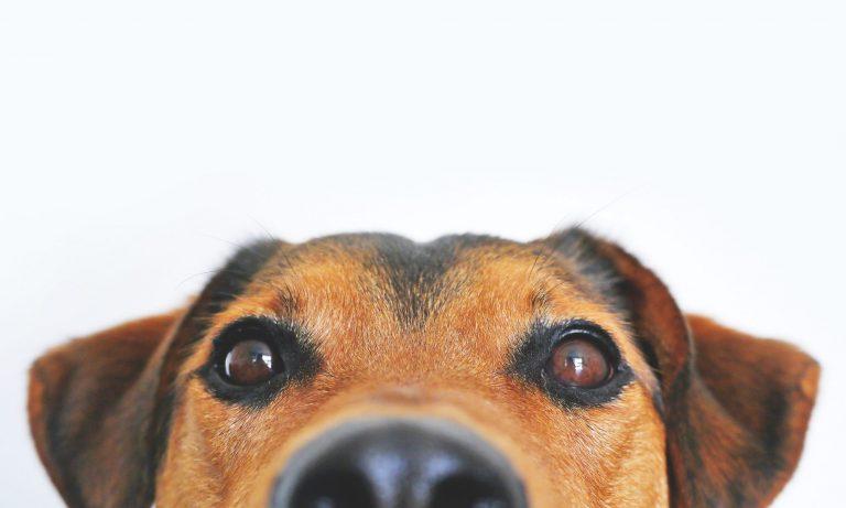 Sveriges bästa hundförsäkring
