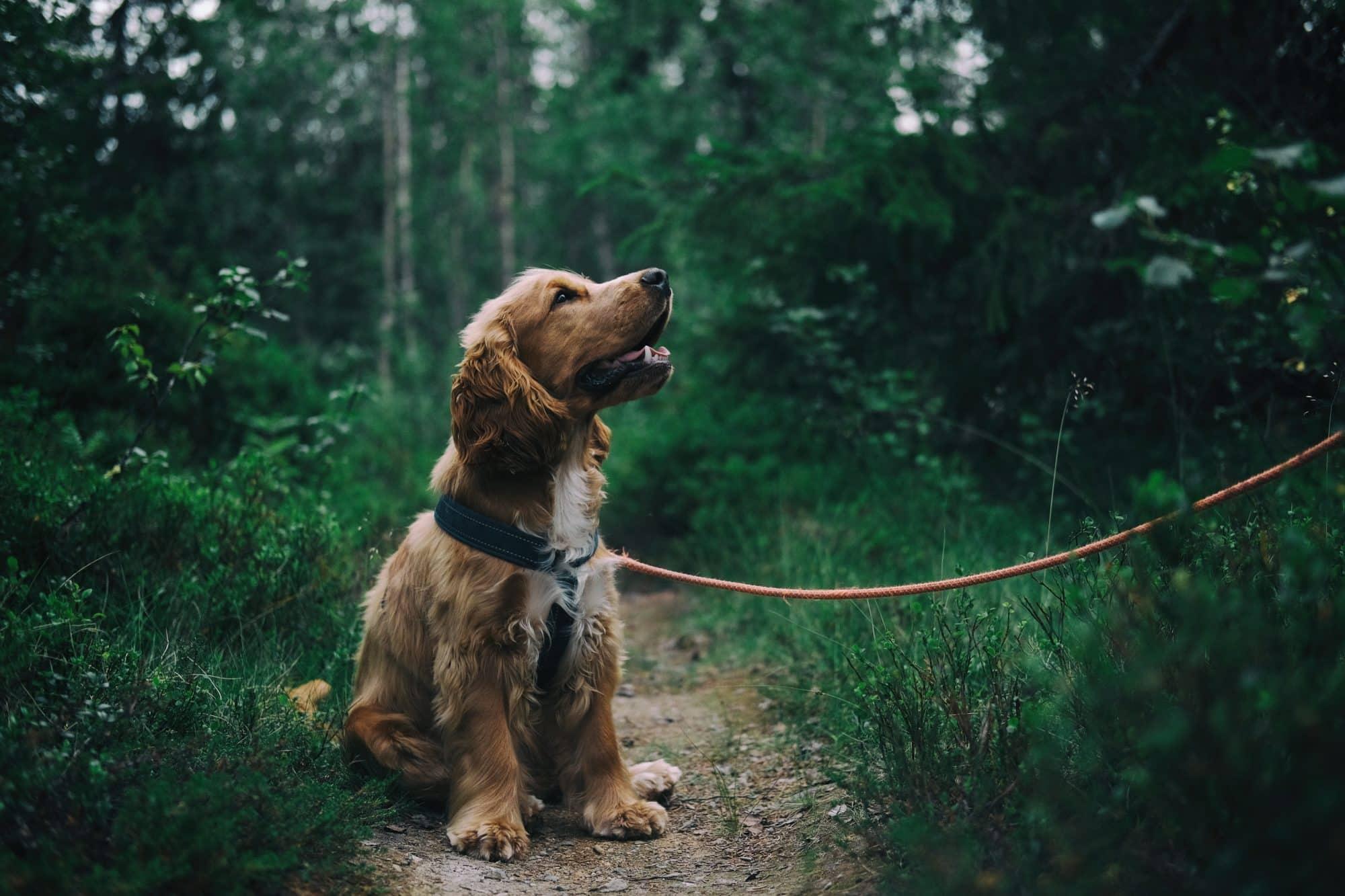 motionera hundvalp