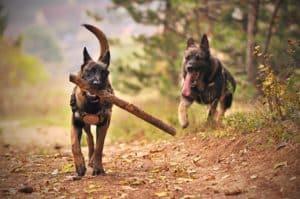 Bästa hundförsäkringen