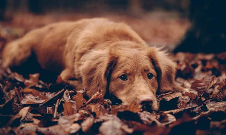 Sveriges vanligaste hundnamn