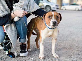 adoptera hund hundar utan hem