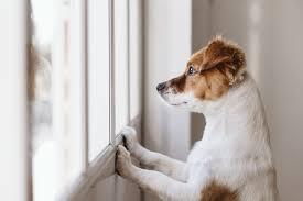 Ensamträning - Ensamträna hund