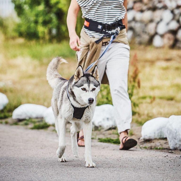 Casual active hundsele