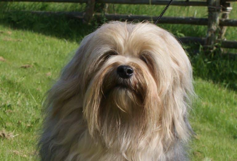LIten hund som inte tappar hår