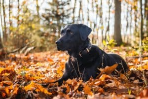 Molly exempelhund