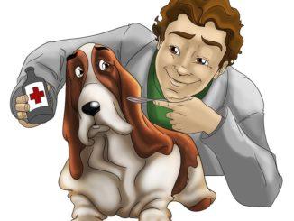 Veterinär hund