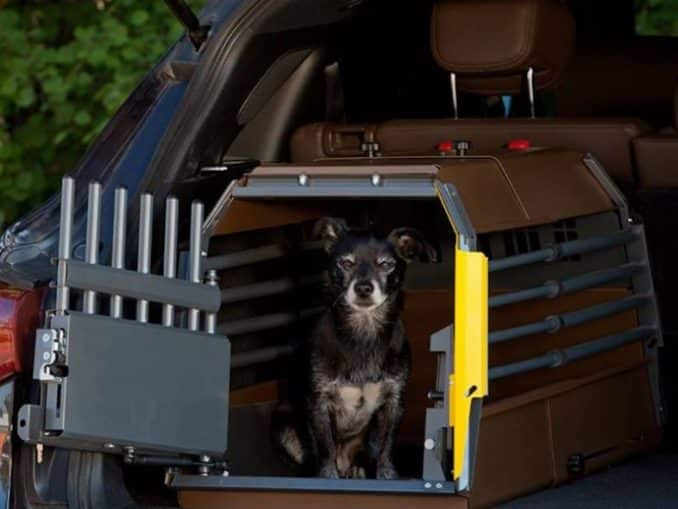 Bästa bilburen för hund