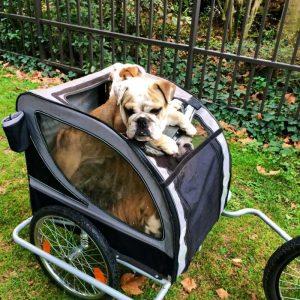 cykelkärra hund