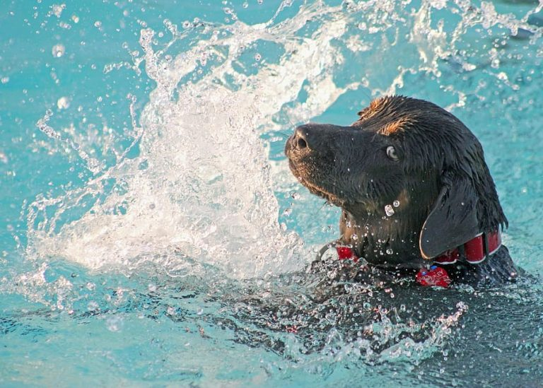 Valp simma pool