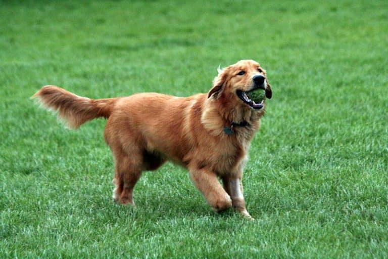 Bästa hunden för nybörjare