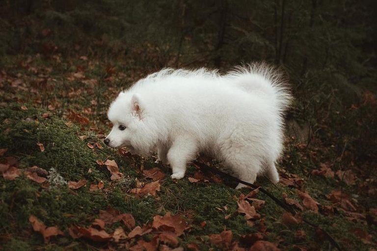 hundraser utan jaktinstinkt