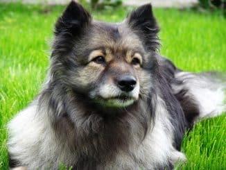 Hund utan jakt