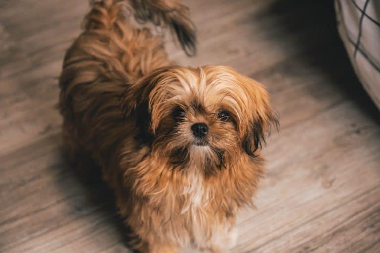 Hundar för nybörjare