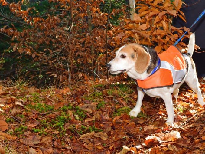 reflexväst-hund-bäst-i-test